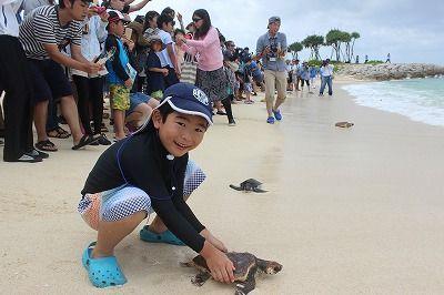 母なる海へと泳ぎ出す ウミガメ140匹を放流 海洋博公園 - 琉球新報 ...
