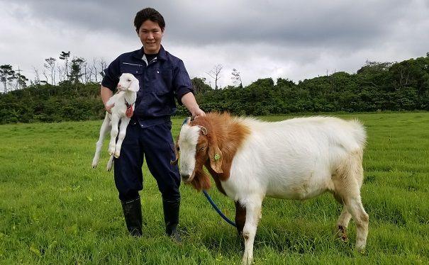 ヤギ、季節外でも繁殖 県畜産研...