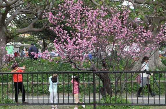 速報 桜 ニュース