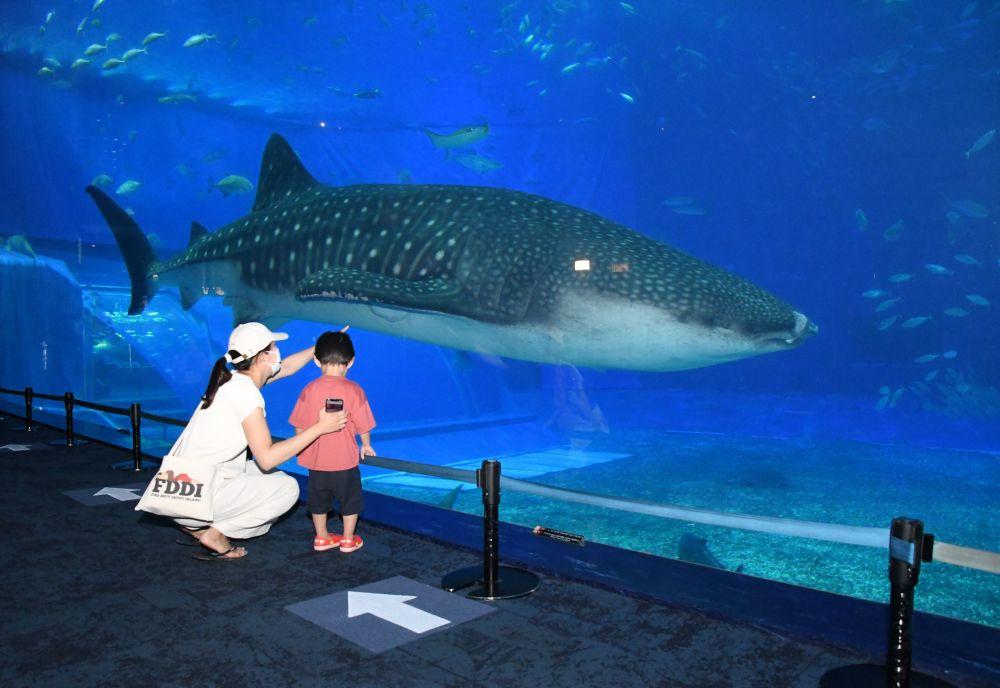 沖縄美ら海水族館が営業再開 地元客「癒やされるー