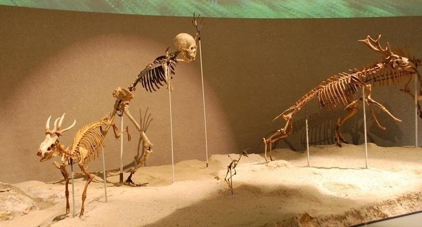 いにしえ の 化石 4 個