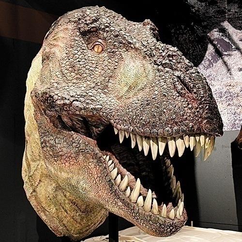 """ティラノサウルス""""ジェーン""""が沖縄に上陸! 進化の謎に迫る見どころをずらり紹介"""