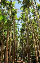 自慢の最大級ヤシ並木 夜は幻想的演出 東南植物楽園
